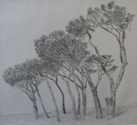Pine trees, Cape Town 1 by Kannemeyer, Anton