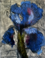 Iris by Kentridge, William