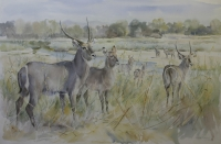Waterbuck by Vaughan, Patricia