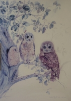 Owls by Charlotte, R