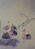 Ducks by Charlotte, R