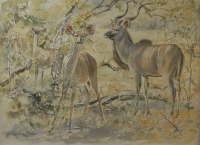 Kudu by Vaughan, Patricia