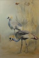 Secretary birds by Vaughan, Patricia