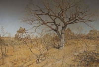Tree/bush by Thomley Stewart, C