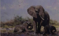 In the mud bath - Elephants by Shepherd, David