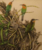Olive Nadagascar Bee-Eater & Bohms Bee-Eater by Ord Kerr, David