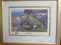 Sitting Leopard/Vision for Augrabies by Bosman, Paul